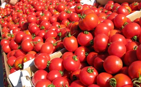 organic-tomatoes-more-antioxidants-than-conventional-tomatoes-universidad-barcelona-university