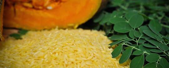 Golden Rice - Photo: International Rice Research Institute (IRRI) via Wikimedia (CC BY)