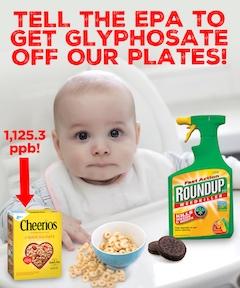 glyphosatepic