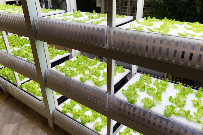 """(Hydroponic production. Does this look """"organic"""" to you?)"""